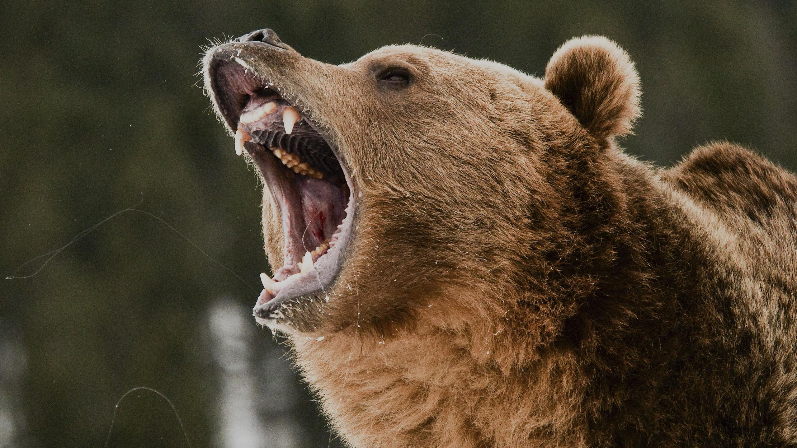 sliderbg-2540x1440px-bear