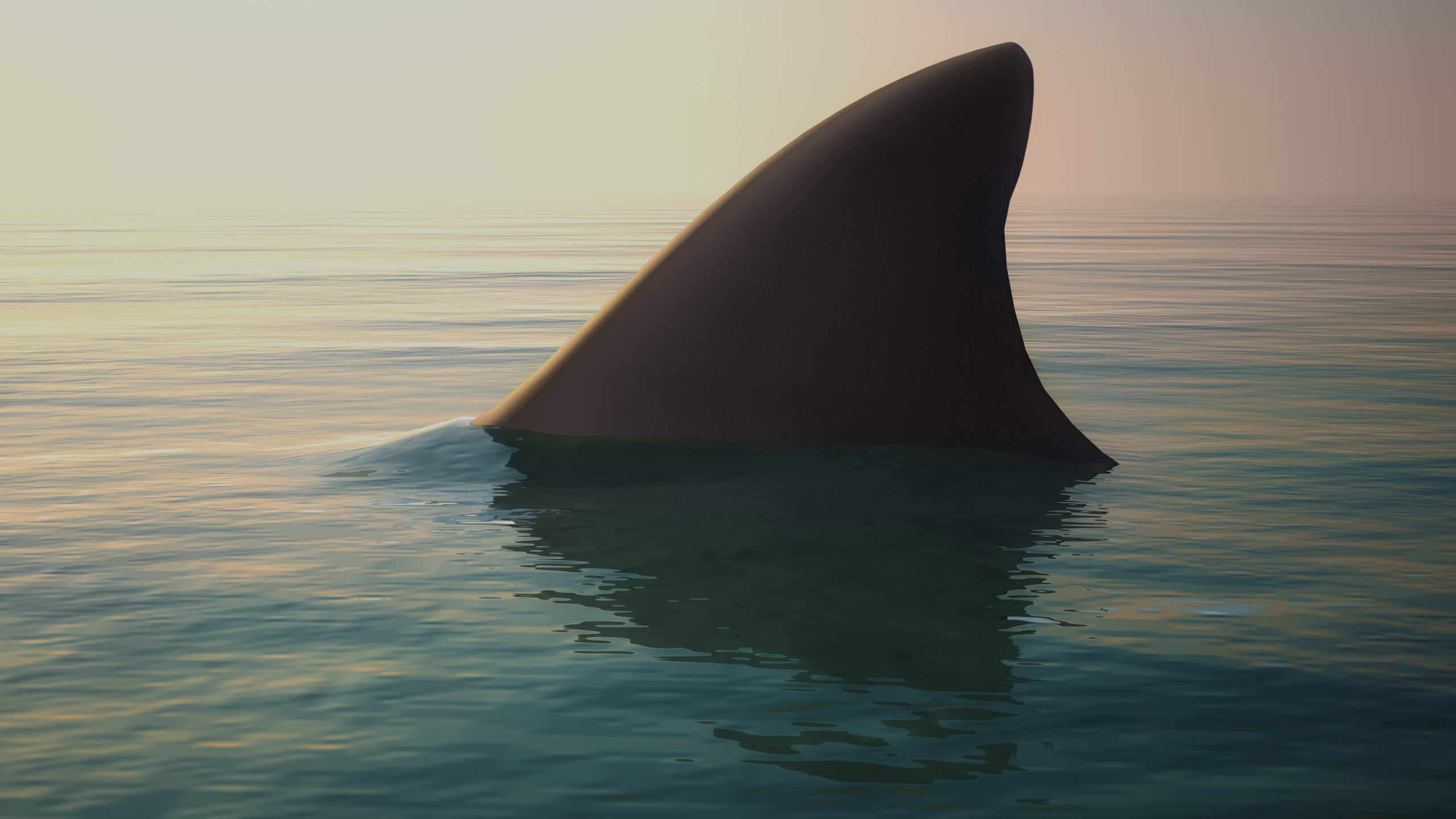 sliderbg-2540x1440px-shark